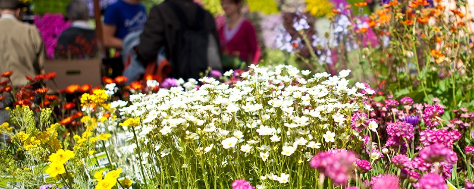 "Flower show ""Cattolica in Fiore"""