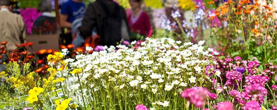 """Blumenausstellung """"Cattolica in Fiore"""""""
